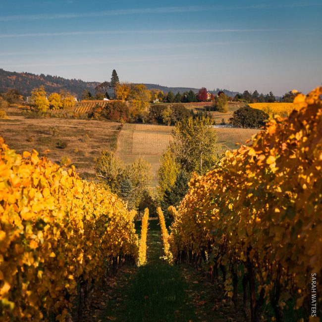 Flanerie Vineyard Ribbon Ridge AVA Oregon Flâneur