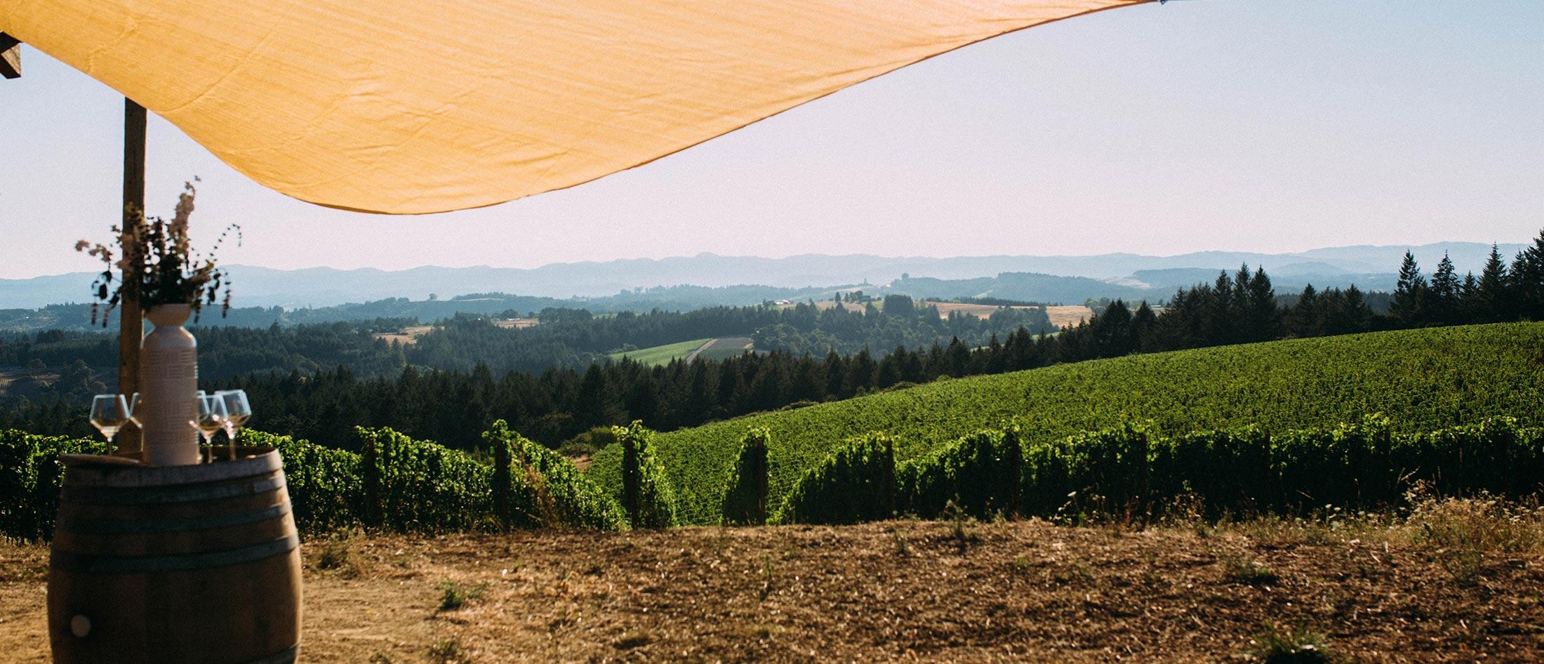 Best Oregon Vineyard Views La Belle Promenade Flâneur