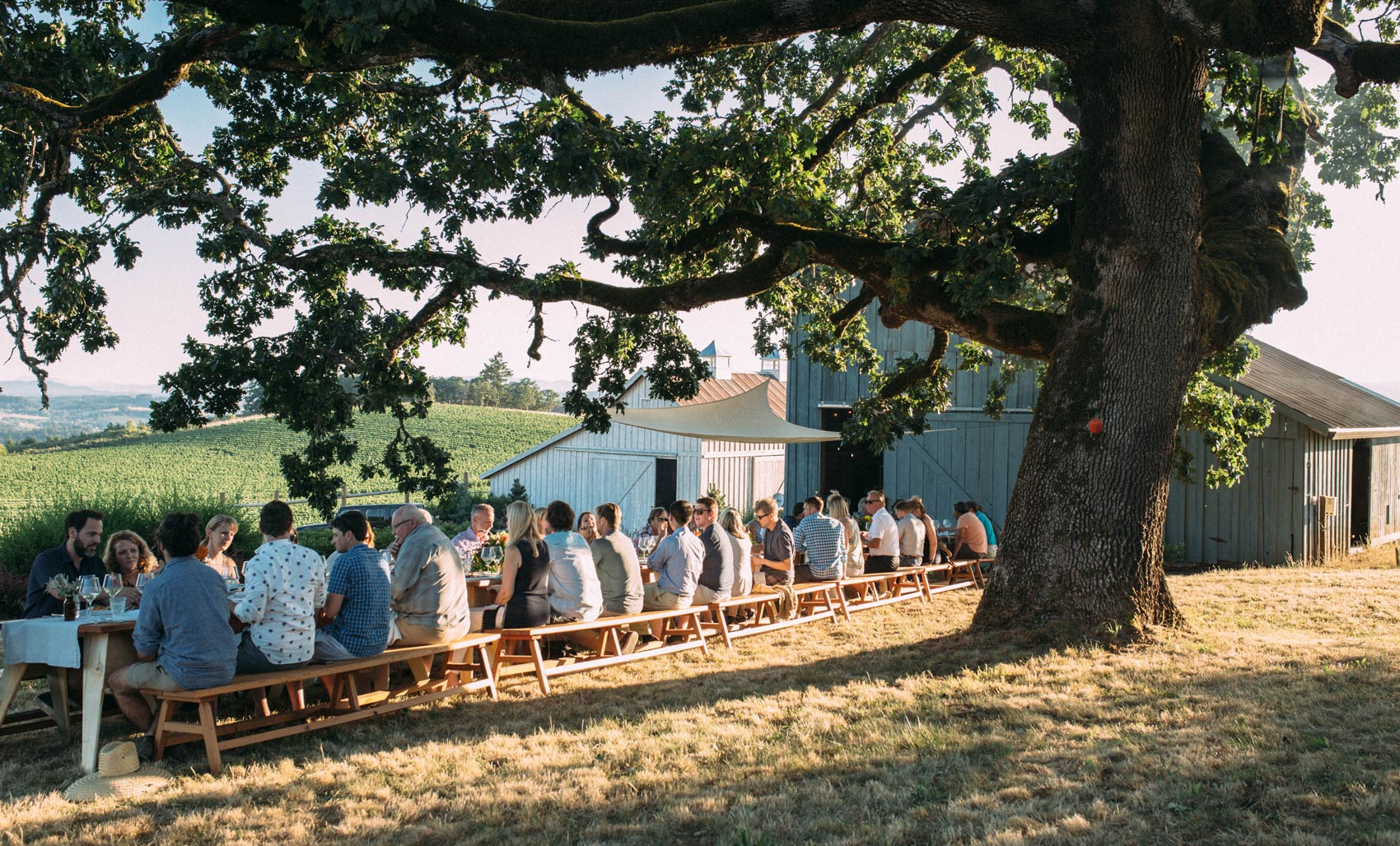 Best Oregon Wine Clubs Flâneur